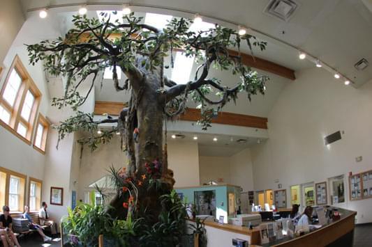 Mount Laurel Animal Hospital – See-Inside Veterinarian, Mt Laurel, NJ