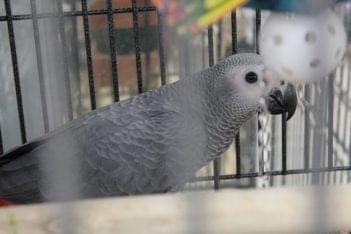 Todd Marcus Birds Exotic