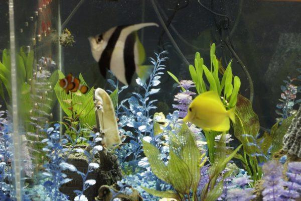 Biomes Marine Biology Center North Kingstown RI Aquarium tropical fish