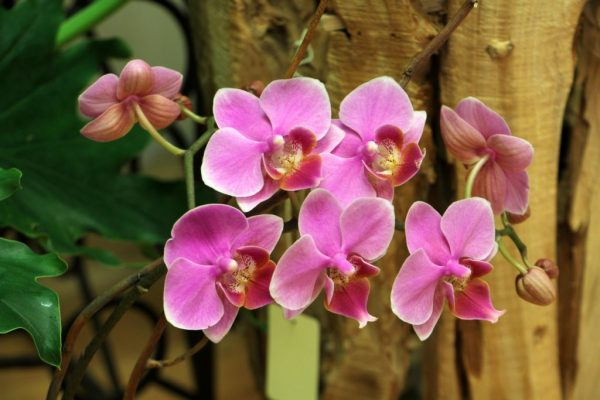 Bakanas Flowers And Gifts Marlton NJ orchid