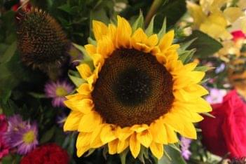 Haddonfield Floral Company sunflower