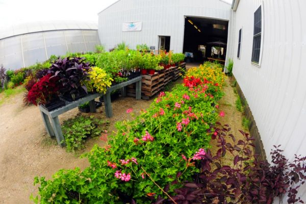 Windy Acres Inc. Cape May Court House NJ greenhouse flowers