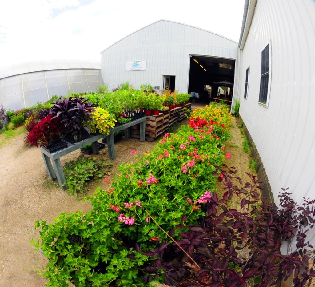 Windy Acres Inc. – See-Inside Greenhouse Farm, Cape May Court House, NJ