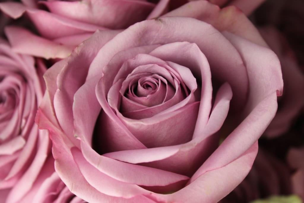 Nature's Gallery Florist – See-Inside Florist, Philadelphia, PA
