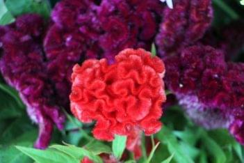 Horse Feathers Floral Design Mt Holly NJ fuzzy velvety red purple velvet flowers