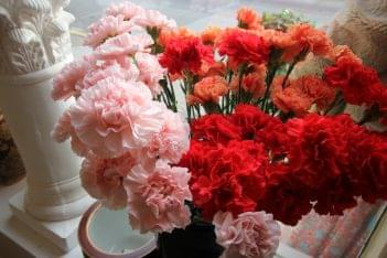 Asters Floral Shop Collingswood NJ Flowers pink red carnations