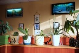 New China Moon Chinese Restaurant Cherry Hill Nj plants