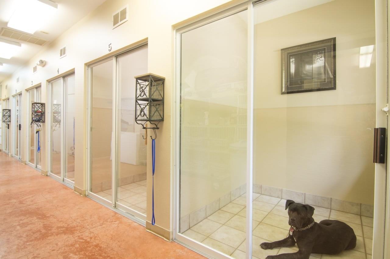 Ridge Road Animal Hospital – See-Inside Veterinary – Rockwall, TX