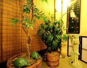 Alice Inoue Life Guidance, LLC Honolulu, HI office plants