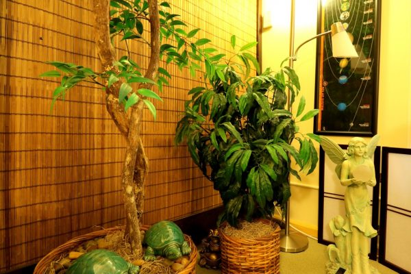 Alice Inoue Life Guidance, LLC Honolulu, HI office plants