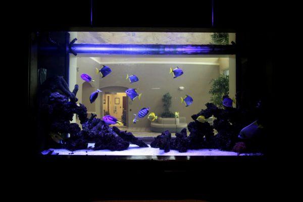 Q Spine Institute Paramus, NJ Orthopedic Surgeon Office Fish Aquarium
