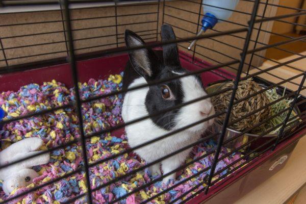 rabbit at Lightbridge Academy pre-school and daycare in Fort Lee, NJ