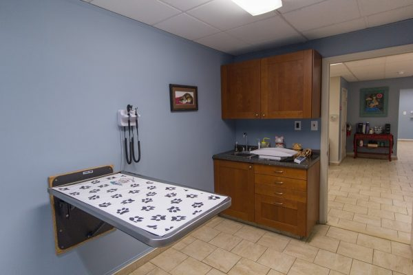 exam room at HousePaws Mobile Veterinary Service in Atco, NJ