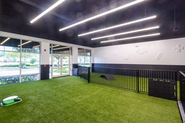 dog daycare play area at Heart + Paw dog care and Veterinary in Marlton, NJ
